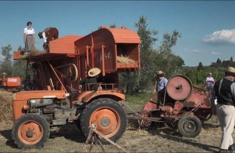 Battitura del grano: la rievocazione a Montespertoli