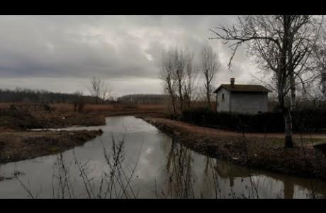 Padule di Fucecchio, 2mila ettari e 11mila uccelli acquatici svernanti